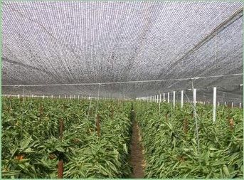 Attrape Nuages pl1582857-hdpe raschel knitted sun shade netting for greenhouse horticulture.jpg
